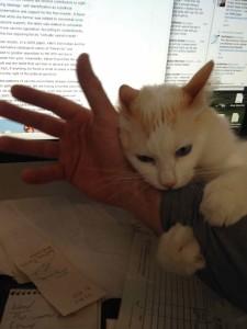 kitty attack