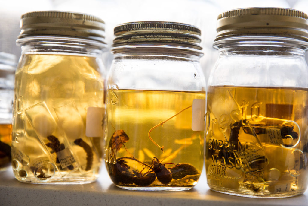 insects on shelves
