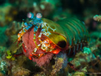 Here is a mantis shrimp. Enjoy! And read on.