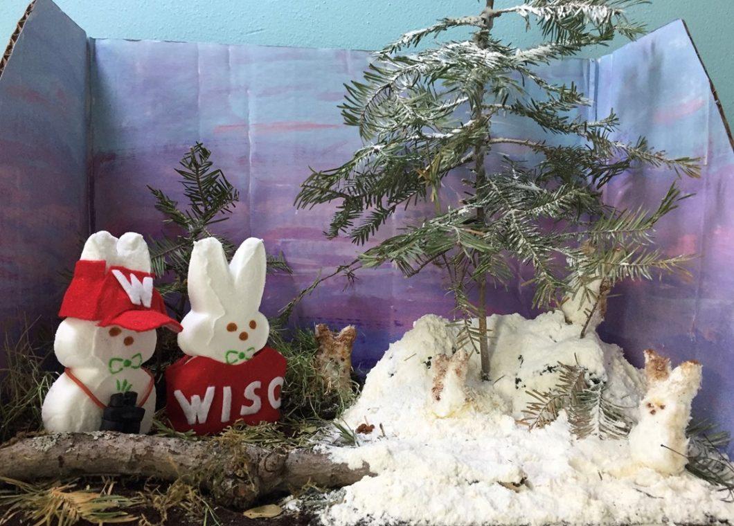 Snowshoe Hare Peepulation Research