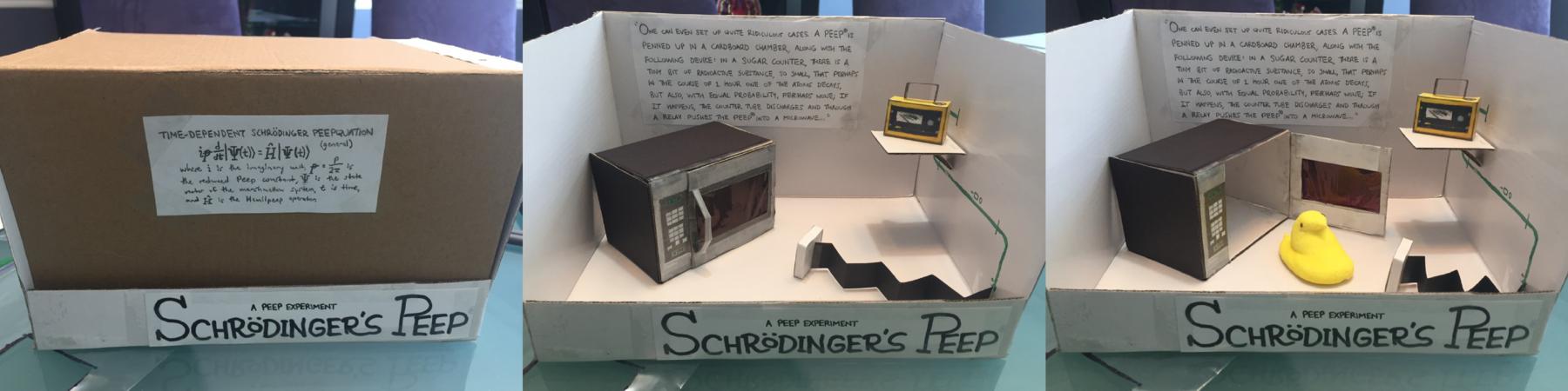 Schrödinger's Peep