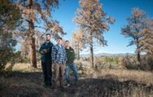 tree coroners